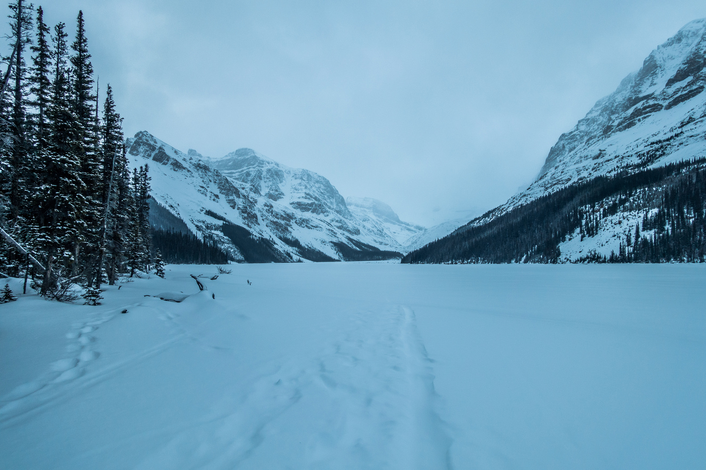 Peyto lake stretches out before me as I exit the trees.