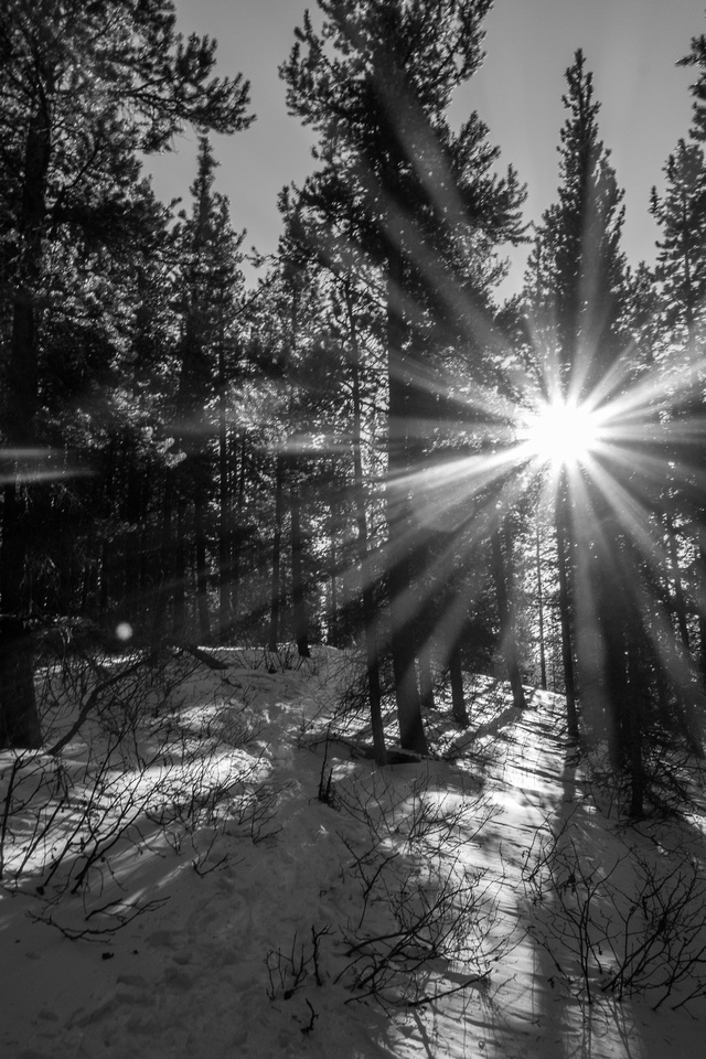A warm sun filters through the forest.