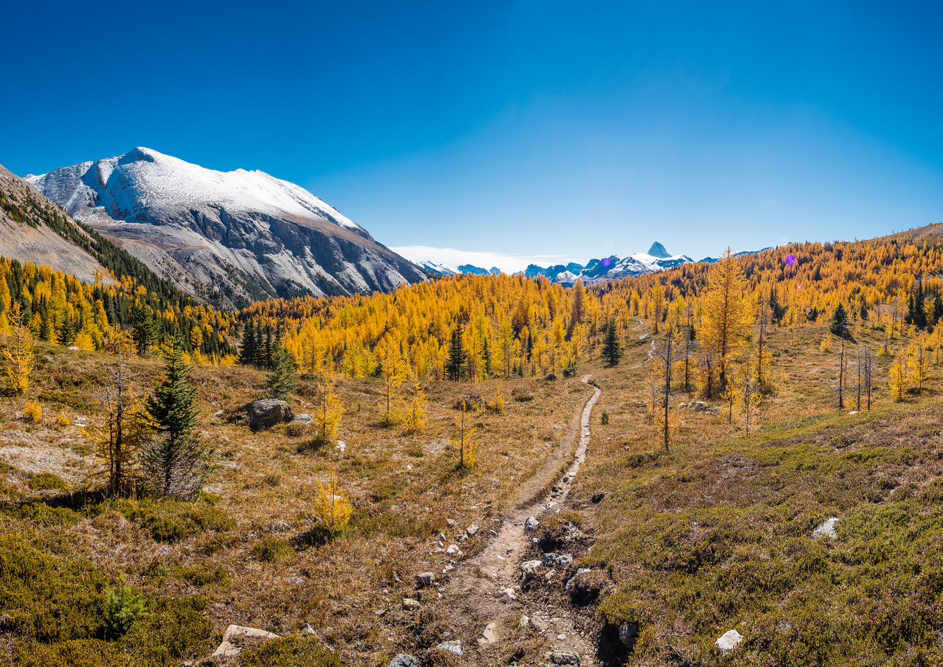 Larch brilliance from near Citadel Pass, looking back towards Mount Assiniboine in the far distance and Golden Mountain rising at left.