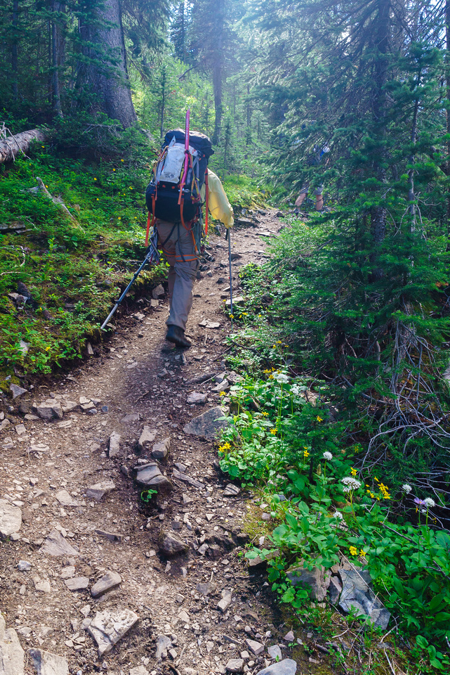 The hiking trail to Burstall Pass is a highway - but a scenic highway at least.