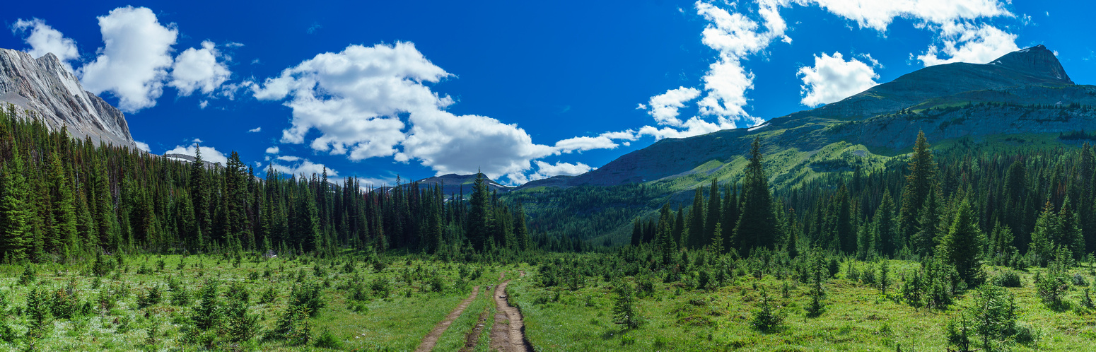 The section of trail leading towards Burstall Pass. Snow Peak rises on the right.