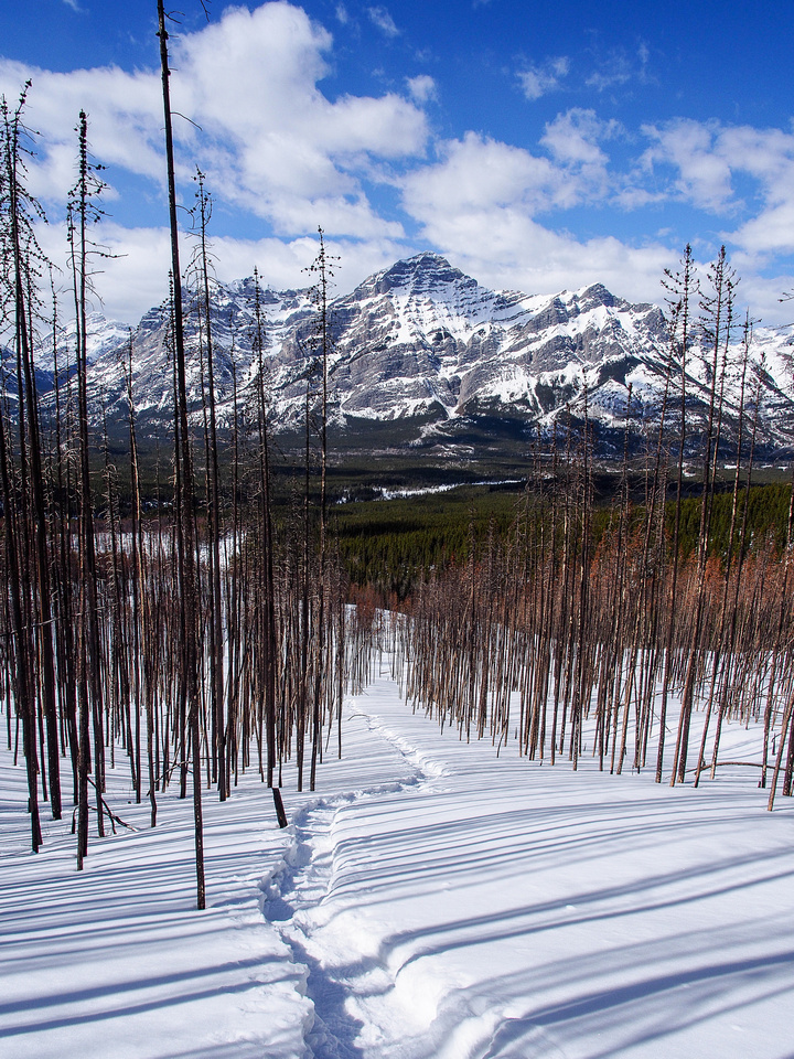 I love photographing in burn areas! Looking down the tracks with Mount Kidd in the background.