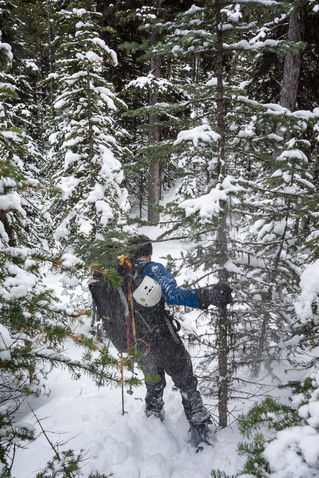 This sums up the worst part of the traverse - tight trees with fresh snow on them.