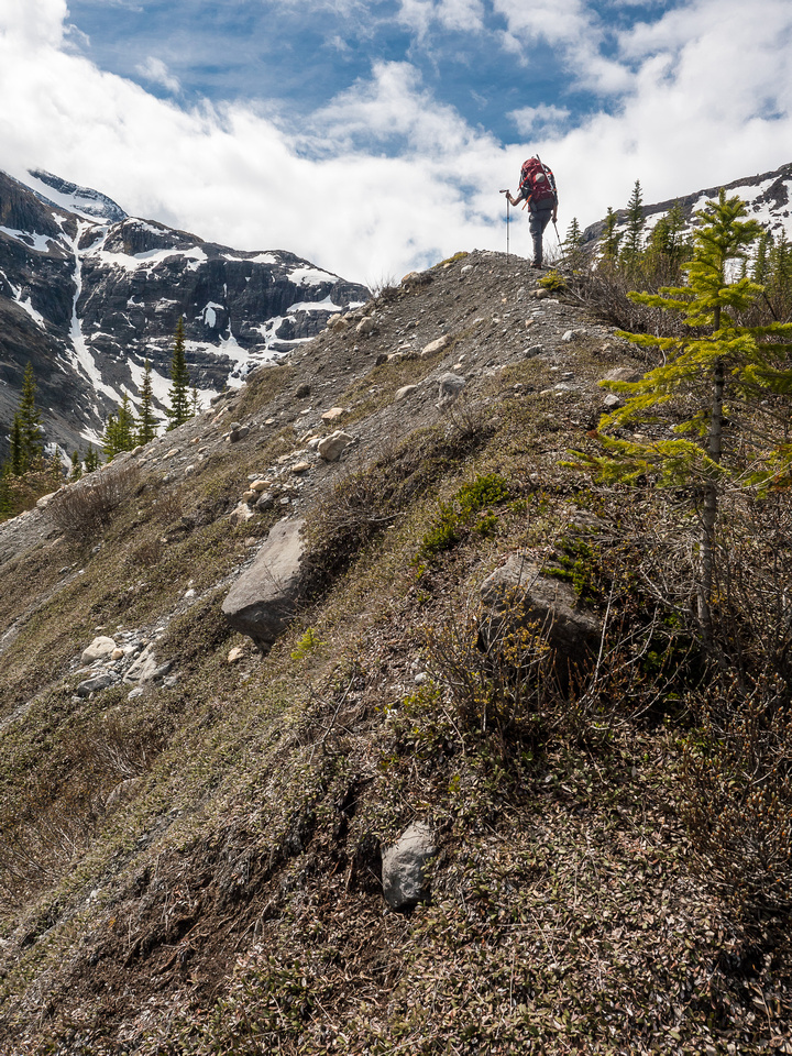 Finally breaking out of the trees onto the crest of an old moraine. The Mons Glacier obviously used to come right down this valley