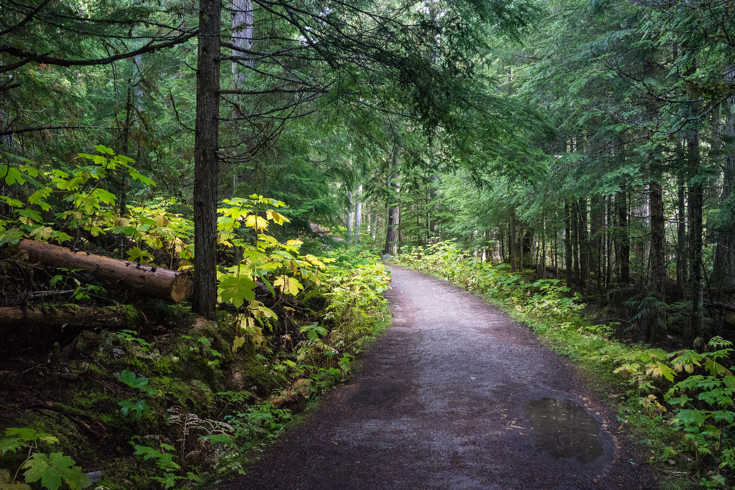 BC forests are so much more lush than AB ones!