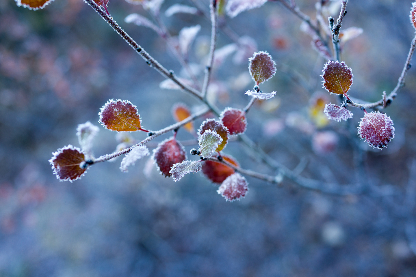 Early morning frost at the Berg Lake campground.