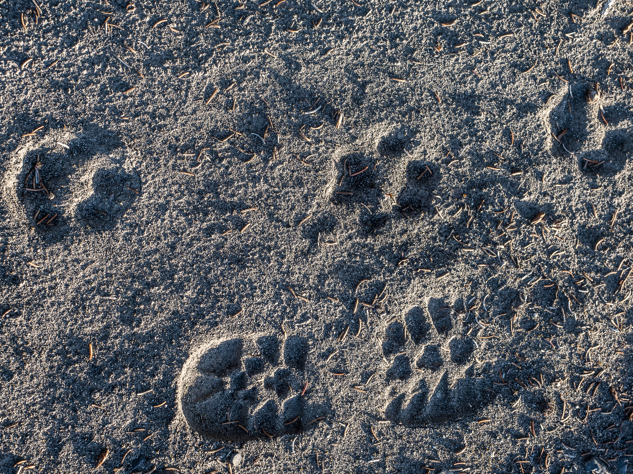 Tracks along the river flats included wolf, bear, dear, moose and of course, humans.