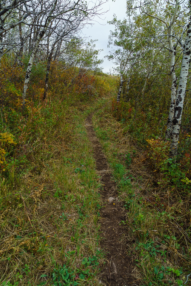 The trail has been recently maintained in the form of clearing vegetation from the sides, which makes hiking and horseback riding much more pleasant.