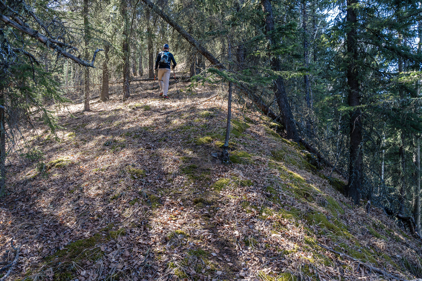 The forested north slopes of Old Baldy are surprisingly pleasant to hike through.