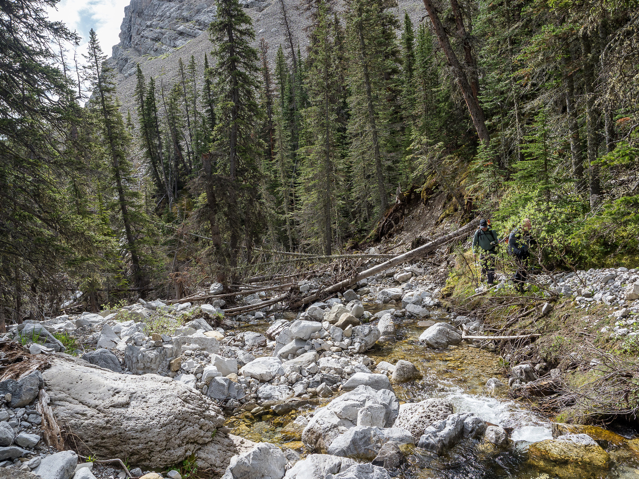 Looking downstream at the spot where we ascended a steep ridge between the two drainages that led us to treeline.