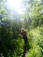 Yes - there's a well traveled trail under all this overgrowth!