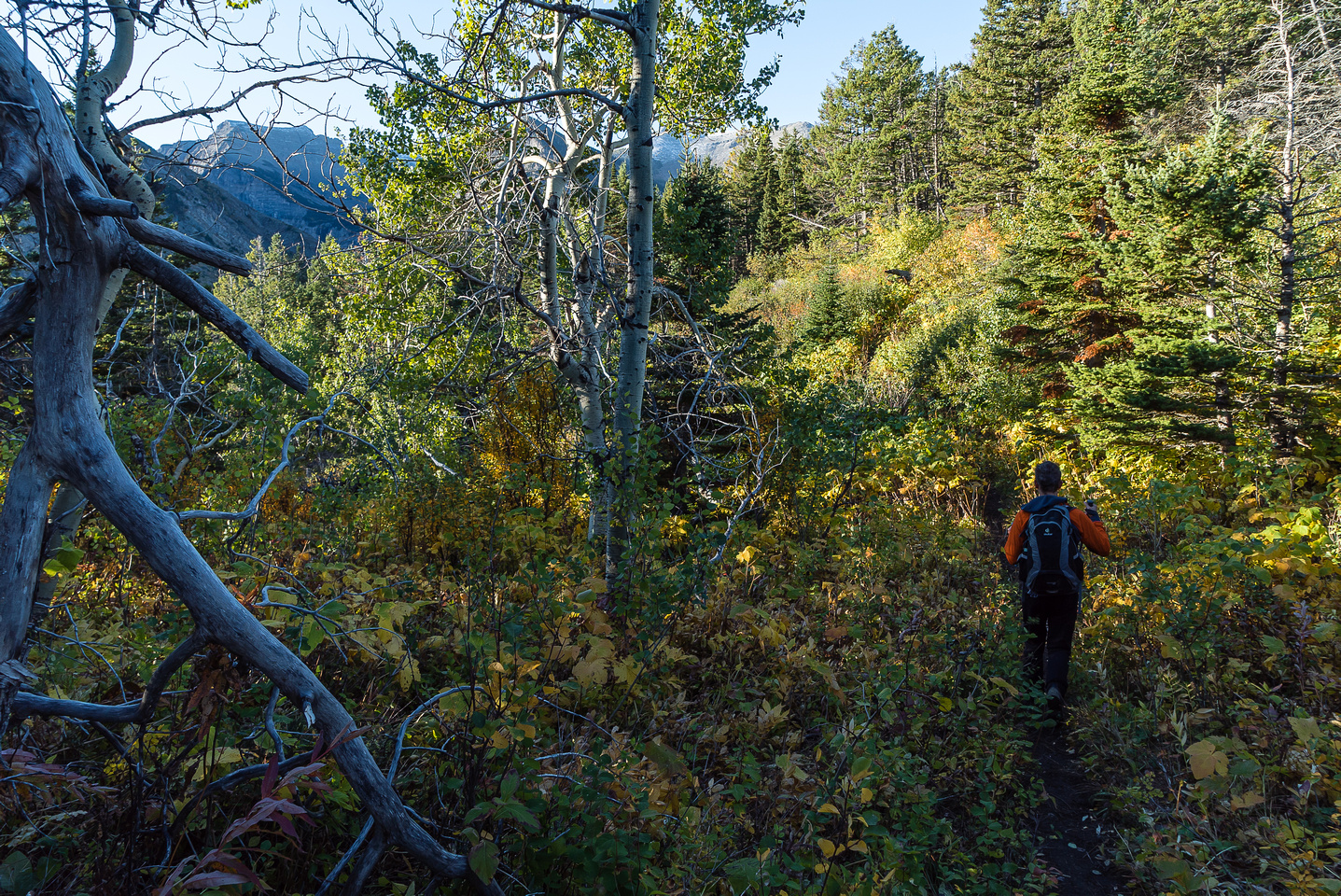 Hiking up a trail through forest to the NE ridge of Vimy Peak.
