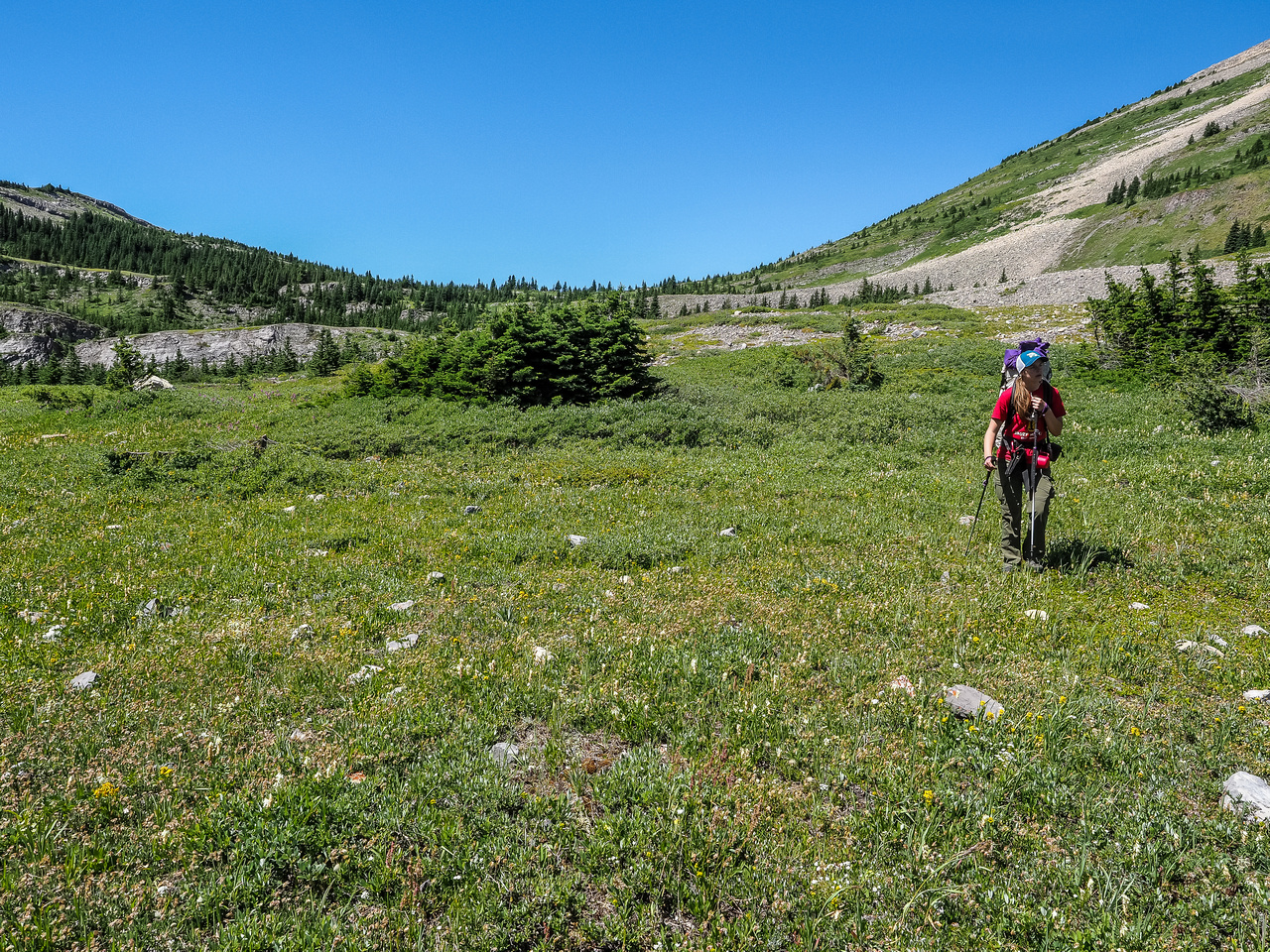 Strolling through the alpine meadows.