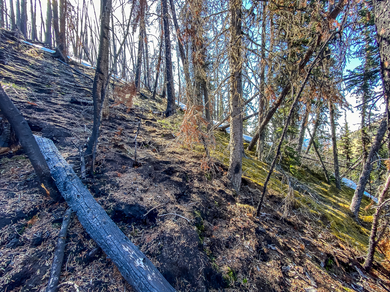 Ascending through another small burn, this time east of Skeleton Mtn.