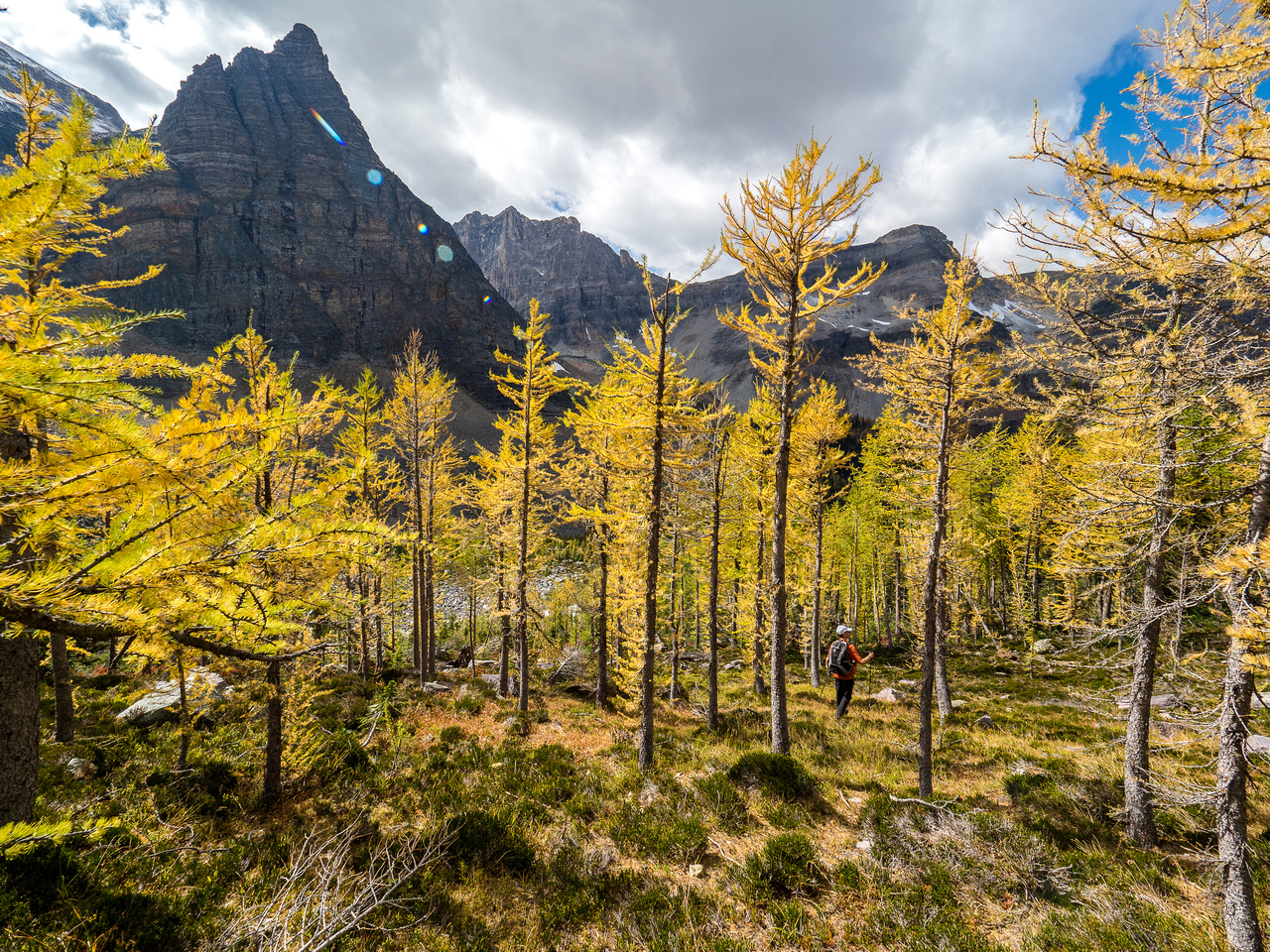 Some larches were nicely turned on the descent towards Haiduk Lake.