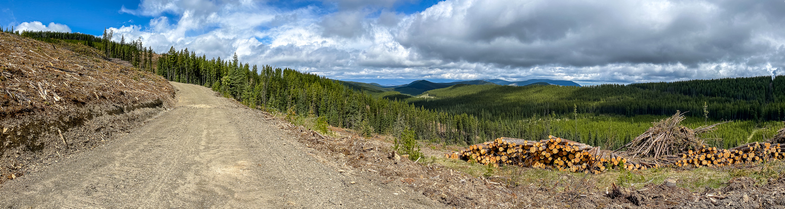 Starting out on a fairly fresh logging road.