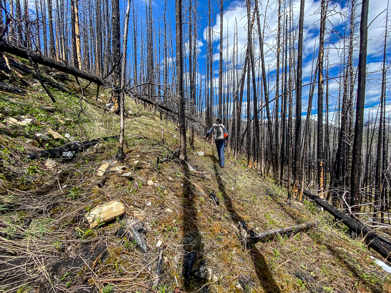 Hiking through a recent burn on the SE end of Wingnut Peak.
