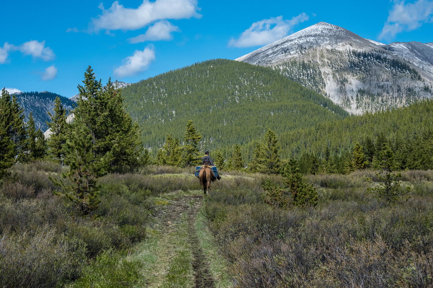 A horse outfitter rides back along the Ram River.