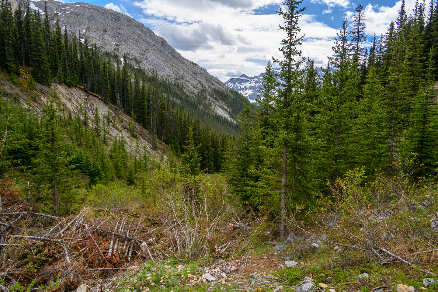 Choked up valley with avalanche debris.
