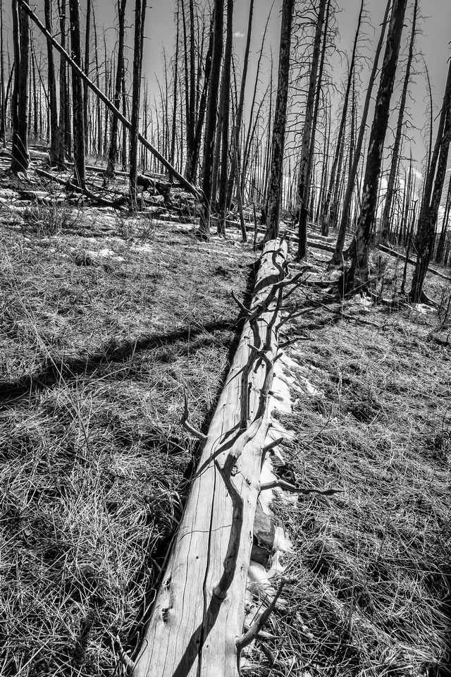 Burn areas always offer interesting geometrical patterns to photograph.