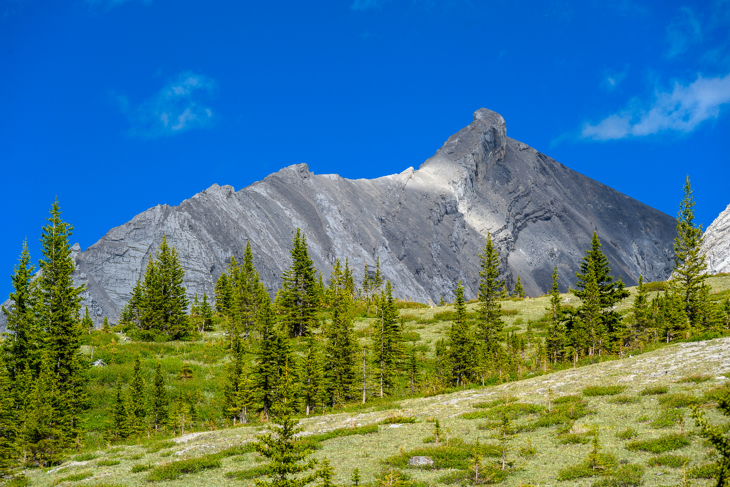 A striking northern outlier of Mount Oliver.