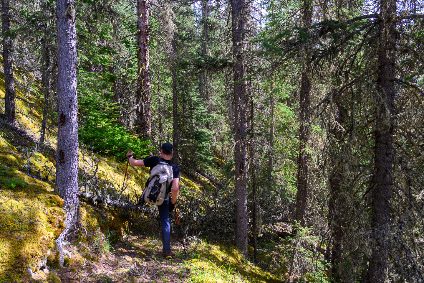 """On the """"good"""" Dormer Pass / Headwaters trail now - still hard to find in spots and lots of debris."""