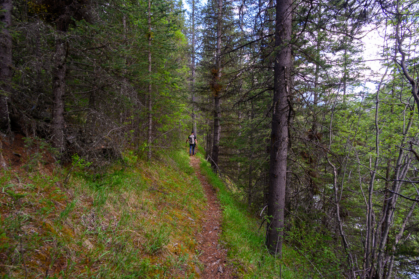Hiking the Dormer River / Pass Trail.