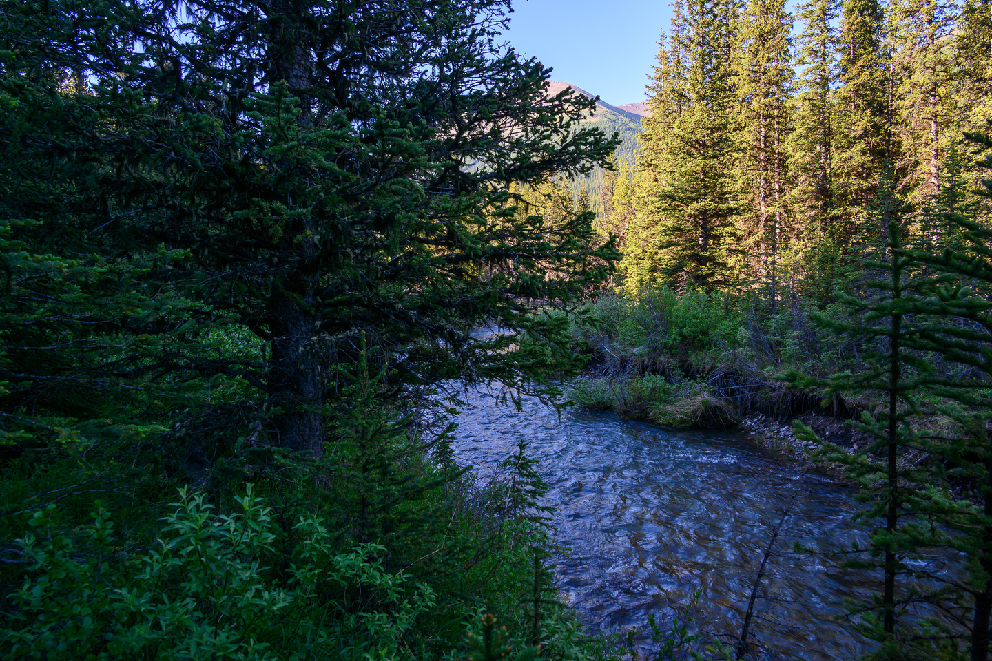 Yup! Here's where I finally dumped the bike along the Sheep River and gave up after ~11km approach.