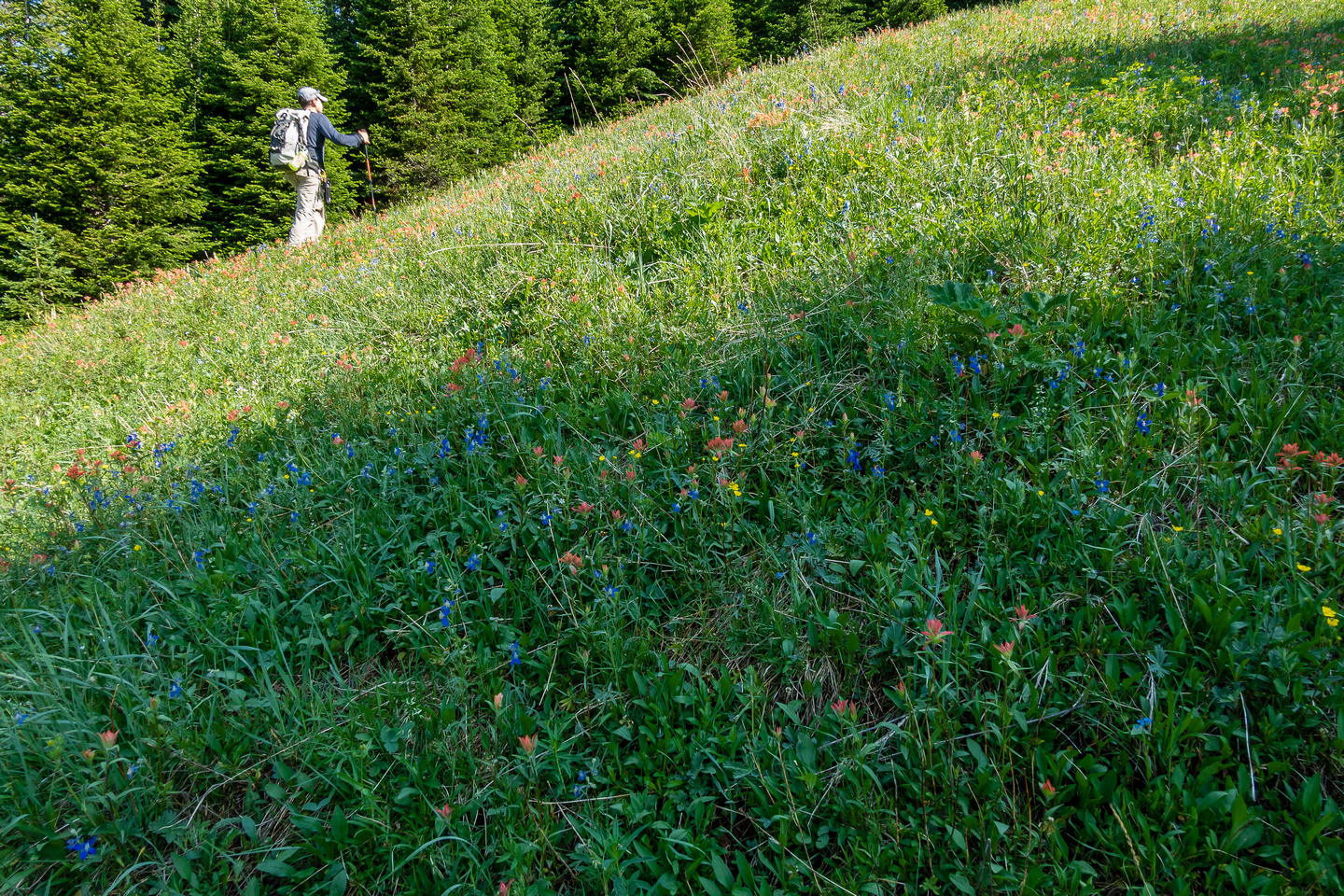 Hiking up a mix of forest, grasses and wildflowers.