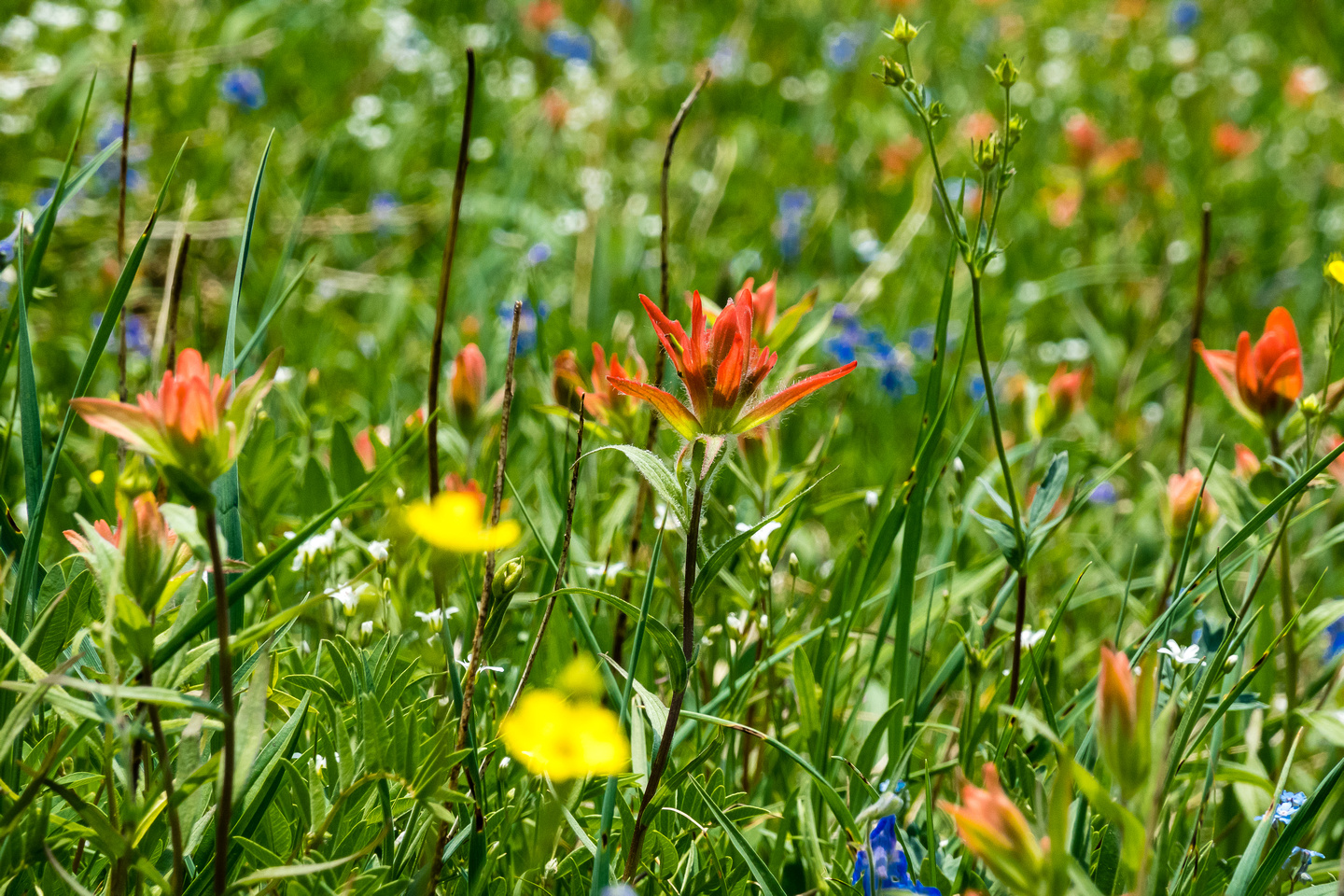 Carpets of wildflowers on the descent.