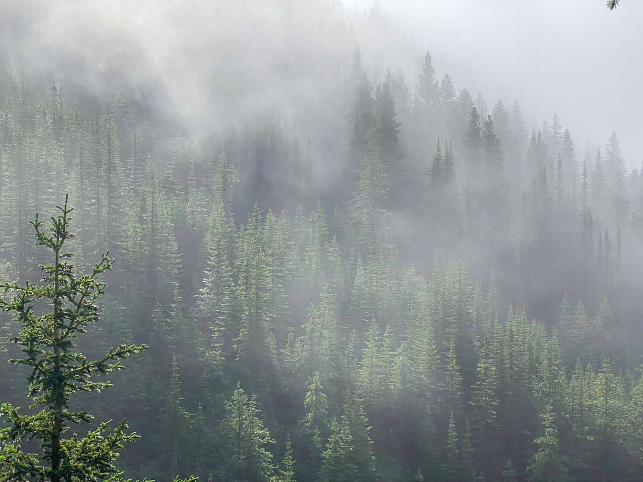 Hiking up the steep, unrelenting Aylmer Pass trail in morning mist.