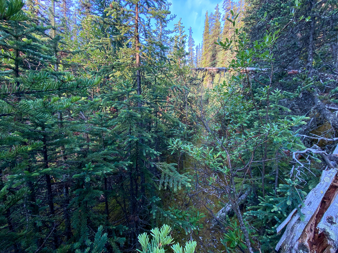 """On the old """"trail"""" up Spectral Creek to Aylmer Pass."""