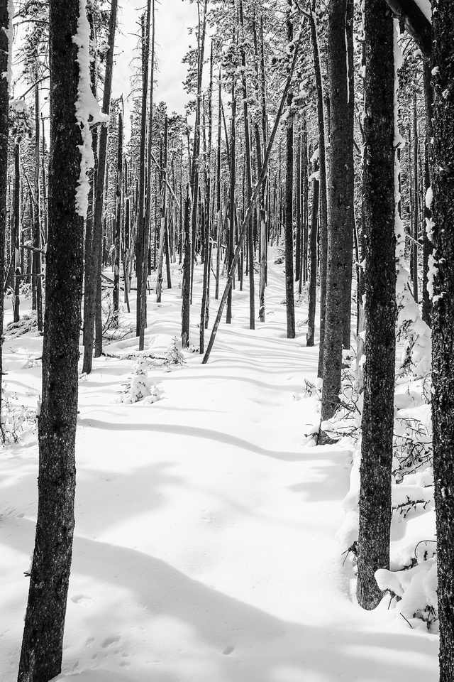 The snow was plastered to the north sides of the trees making for interesting patterns in the forest.
