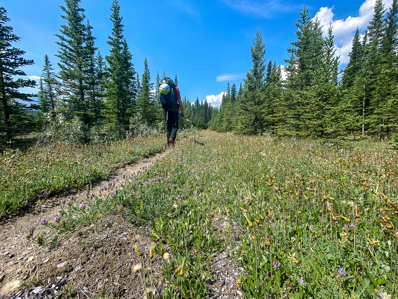 Hiking the Red Deer River / Cascade fire road Trail.