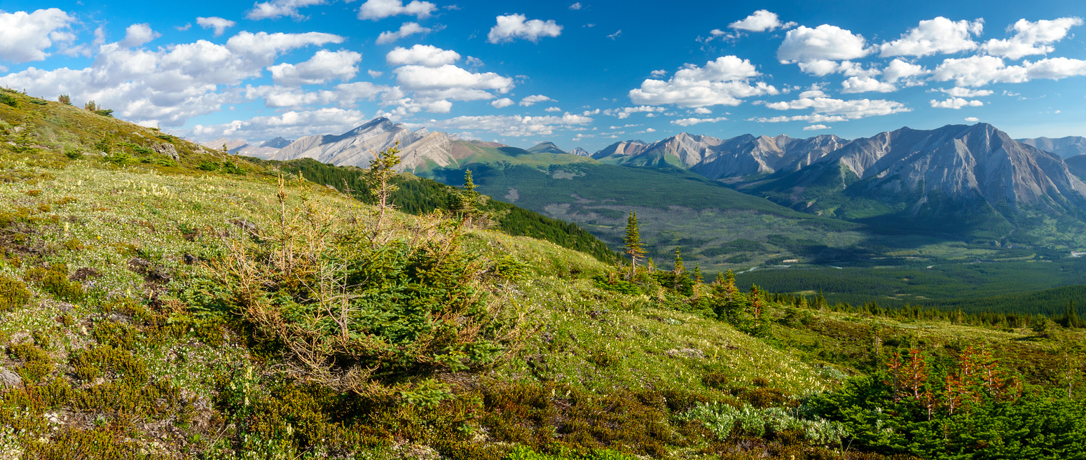 At treeline on Prow's east slopes. Views over the Red Deer River to Divide Pass (C).
