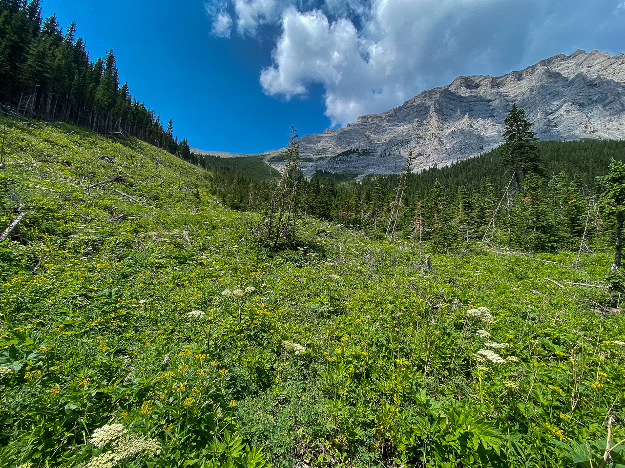 Looking up the avalanche patch to a distant east access gully and east face (R).