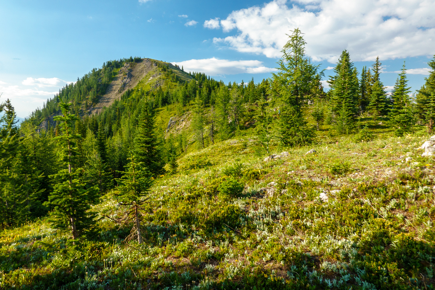 Hiking to Mount Fortune.