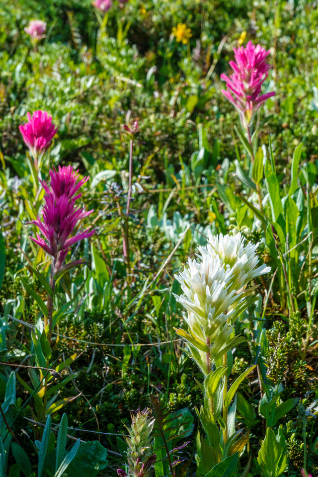 Pink and white paintbrushes.