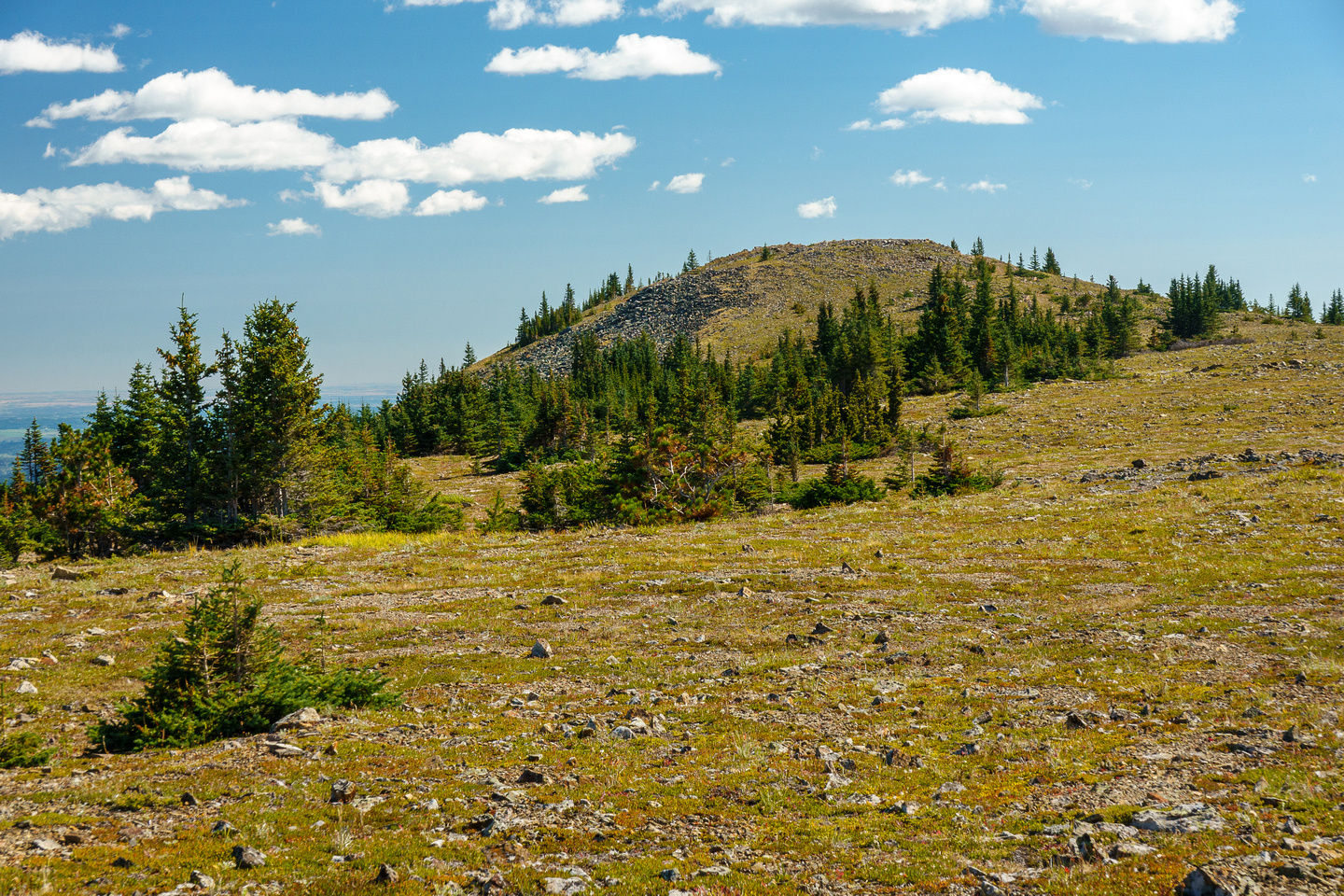 Hiking up the broad west ridge of Forgetmenot Mountain.