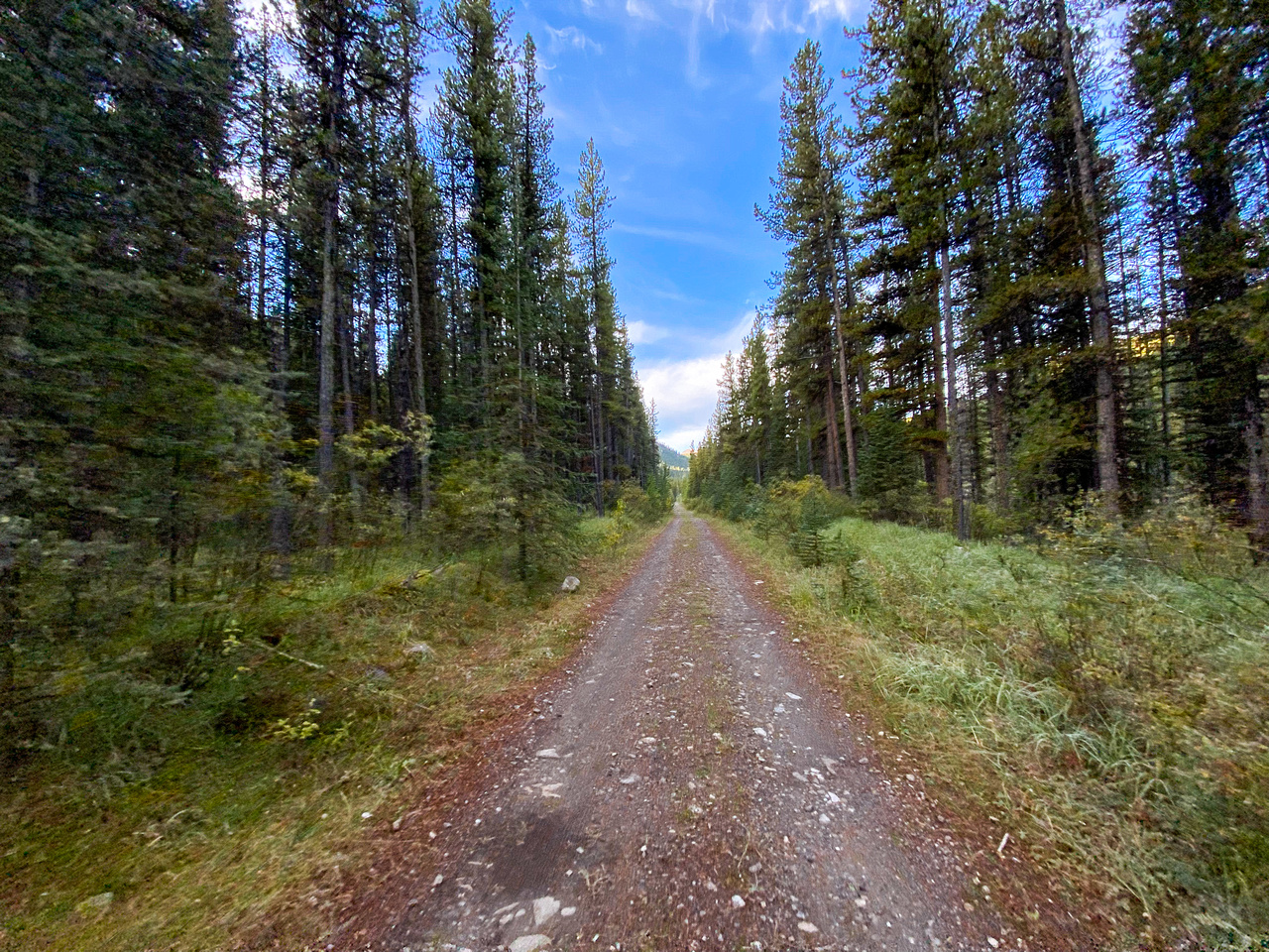 The Sheep Creek road is a mix of great riding and terrible riding.