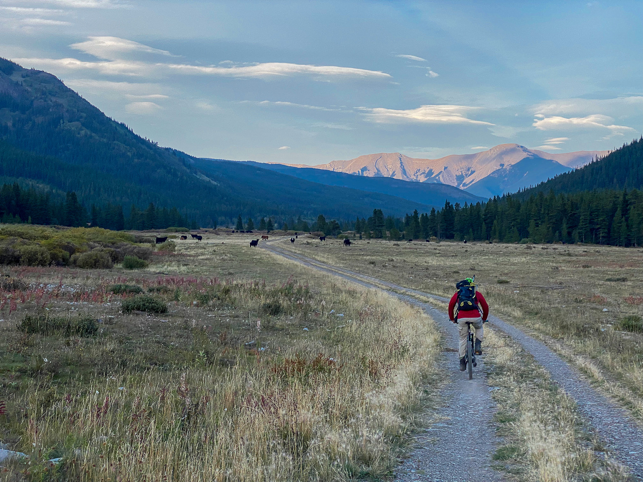 Biking back along the wide Cataract Creek trail. Note the cows and mount Burke.