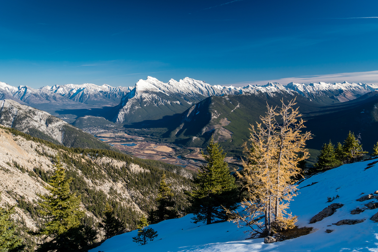 A stubborn larch with Rundle in the distance.