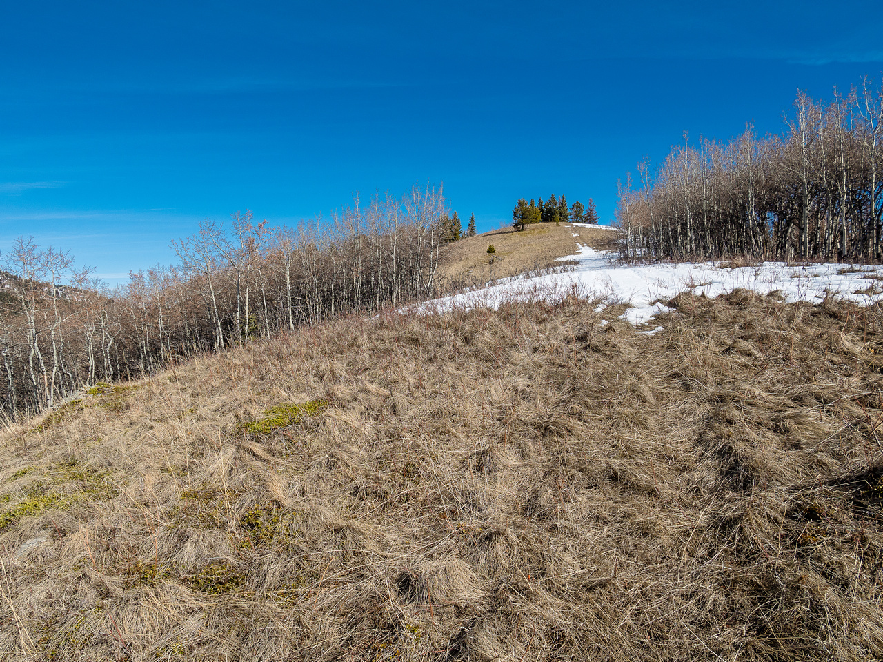 Final slope to the treed summit.
