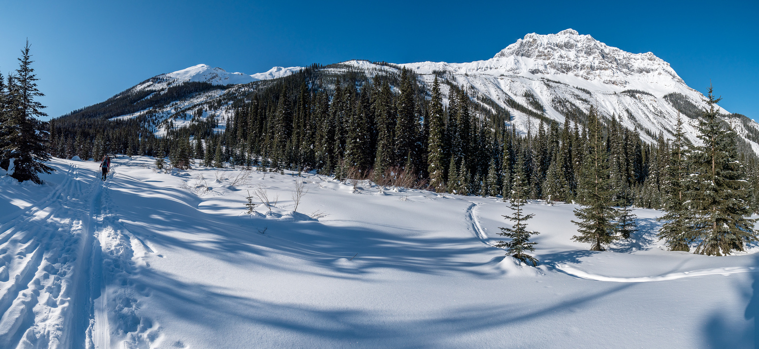 The lower approach to Mount Field which is still mostly hidden left of center. This photo shows the steeper avalanche chutes that can be skied on descent at right of center