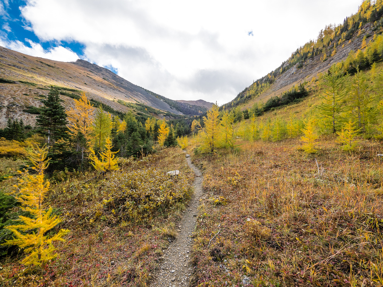The trail heads through brightly colored larches towards the small headwall between the Upper and Lower Southfork Lakes.