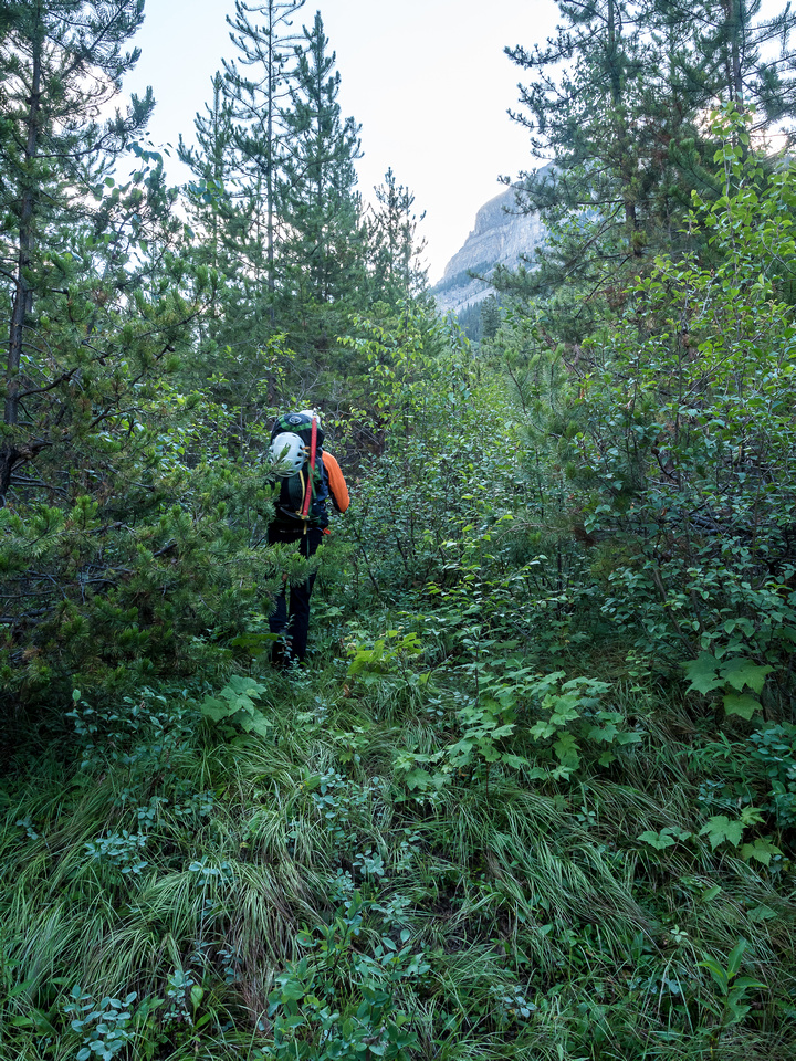 """We enjoyed a very brief """"trail"""" in the scrub just climber's left of the creek at the bottom of the old clear-cut."""