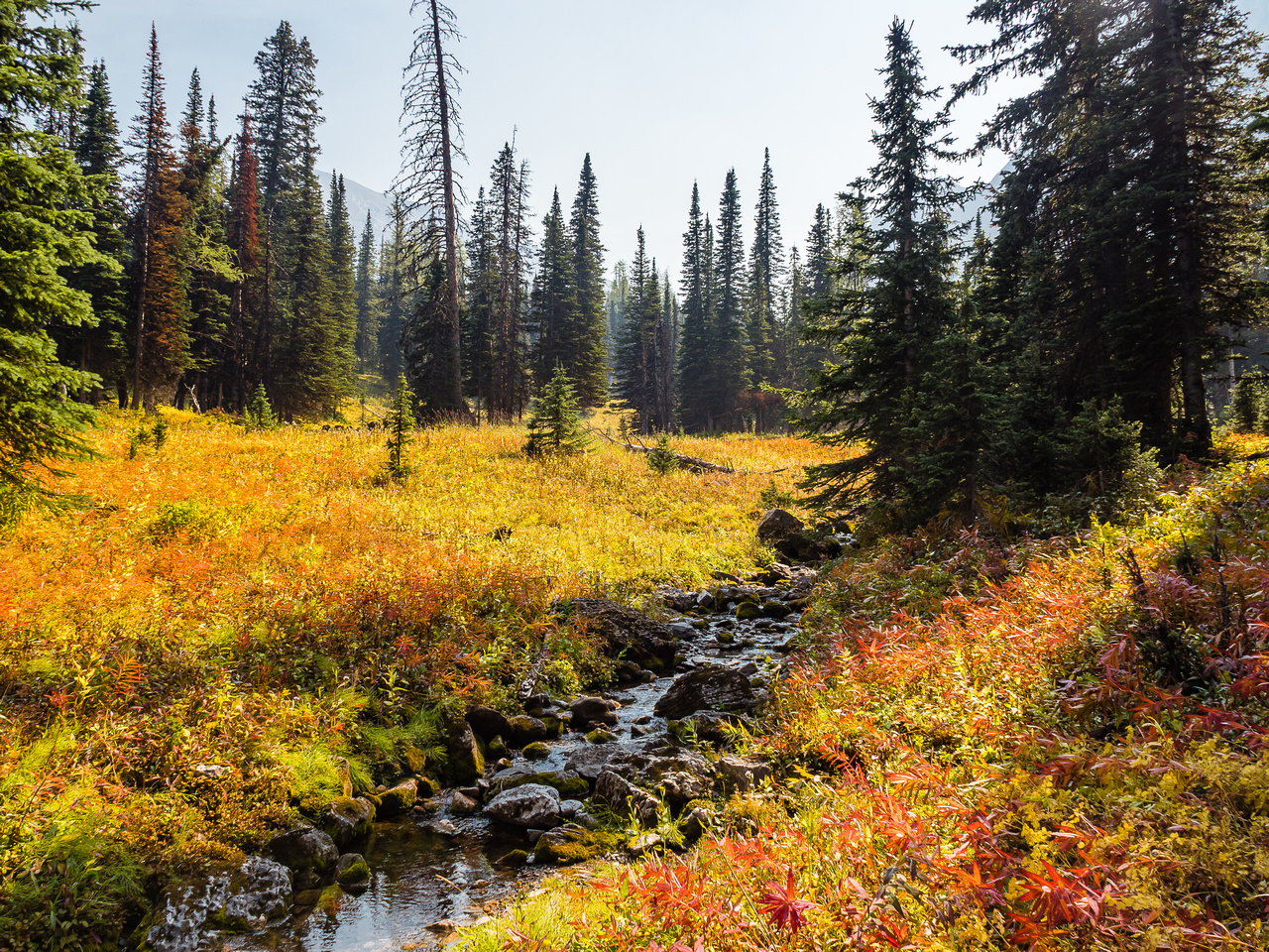The meadows were on absolute fire with fall colors in the vegetation.
