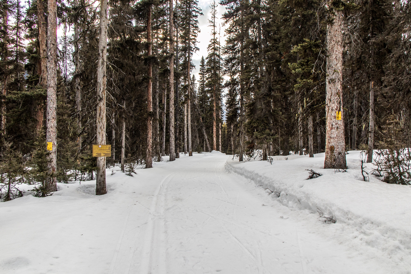 The wide, groomed trail is about the end after reaching the Banff National Park boundary.
