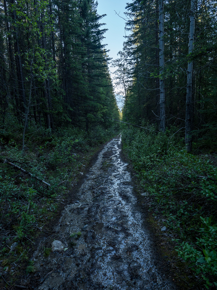 There were quite a few unexpected muddy sections along the first part of the OHV track from streams running onto the trail without proper drainage.