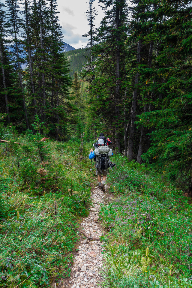 Back in the trees on the Helen Creek trail - a steep and fast descent.